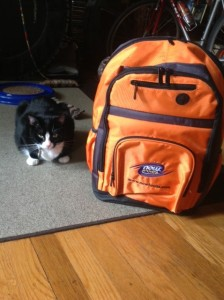 You can win the orange backpack filled with NOW goodies. The kitty stays here with me.